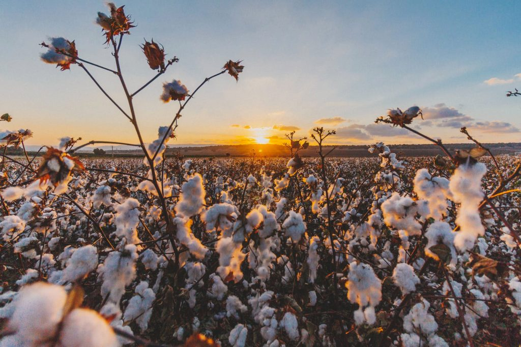 Cotton Fields - Love the Environment - Ventile